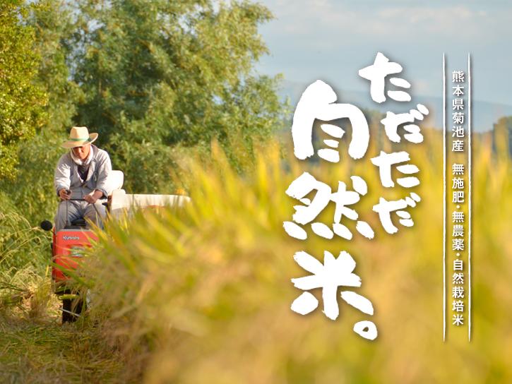 きくち村「ただただ自然米」の稲穂