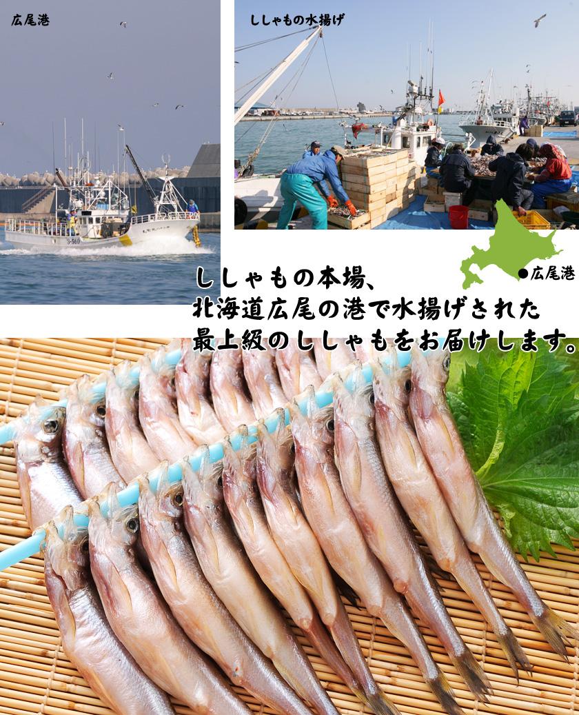 北海道広尾漁港で水揚げ