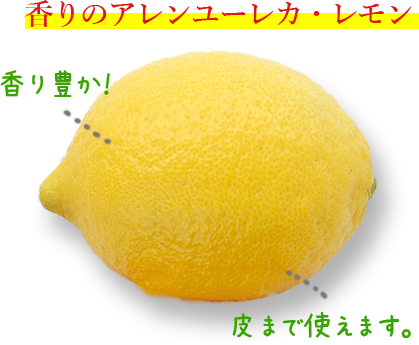 果汁たっぷりマイヤーレモン、香りのアレンユーレカ・レモンのご購入はこちら