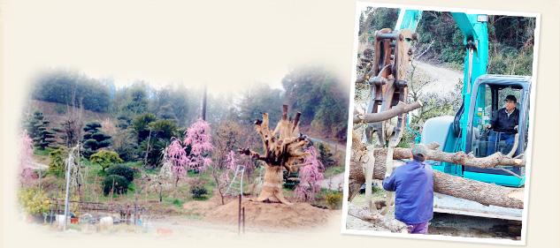 植木、盆栽