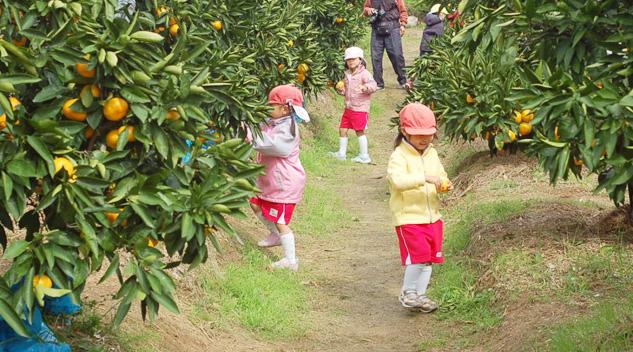 みかん狩り&レモン狩りに来ませんか?淡路島の自然と気持ちいい空気の中でお楽しみください♪ここのは実も果汁も皮までおいしいんです!!