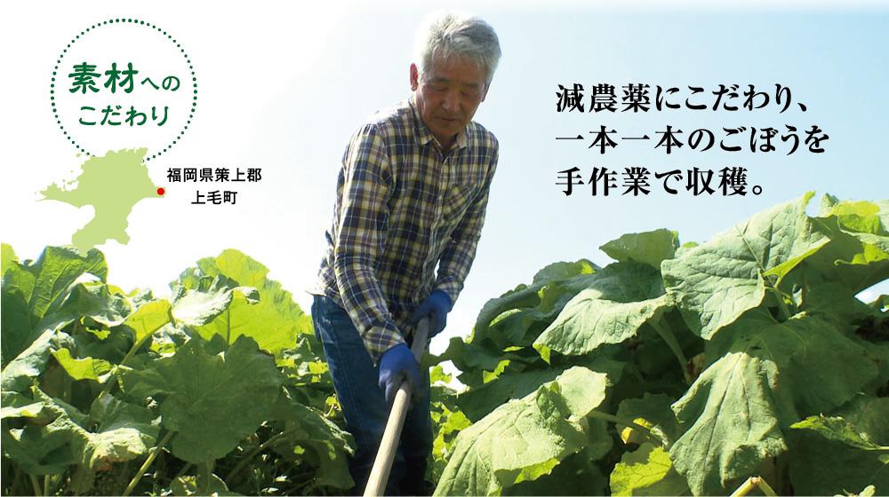 素材へのこだわり 福岡県策上郡上毛町 減農薬にこだわり、一本一本のごぼうを手作業で収穫。