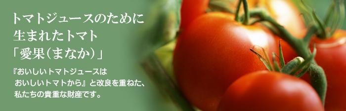 トマトジュースのために生まれたトマト「愛果(まなか)」