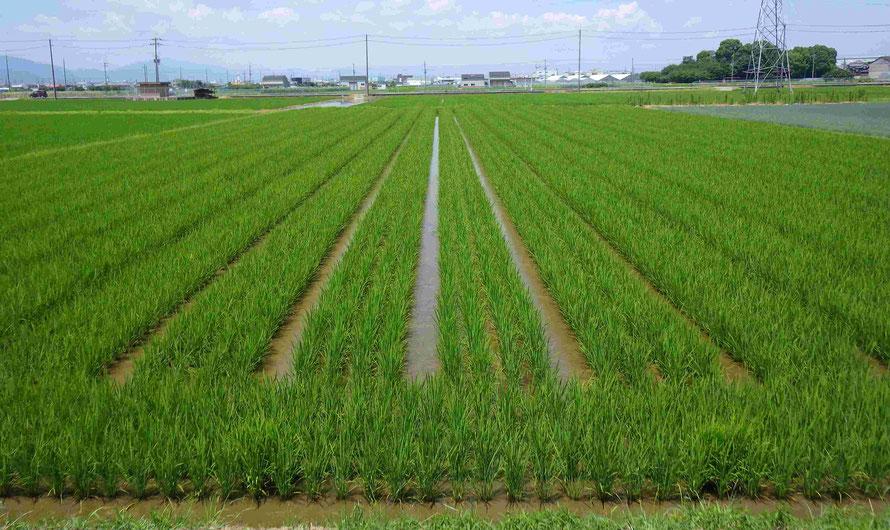 京都辻農園
