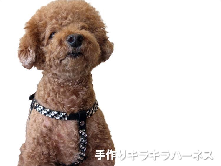 犬の手作りハーネス - キラキラレザーハーネス - 軽井沢わんストーン
