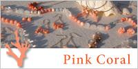ピンク珊瑚