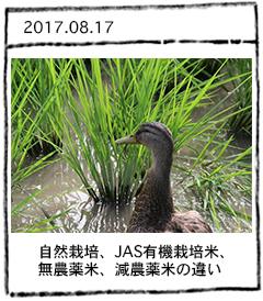 自然栽培、JAS有機栽培米・無農薬米・減農薬米の違い