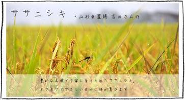 ササニシキ 山形東置賜 吉田正行さん作