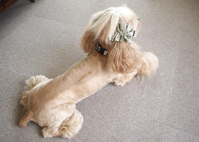 犬用 クールネック 熱中症対策 リボンがない時