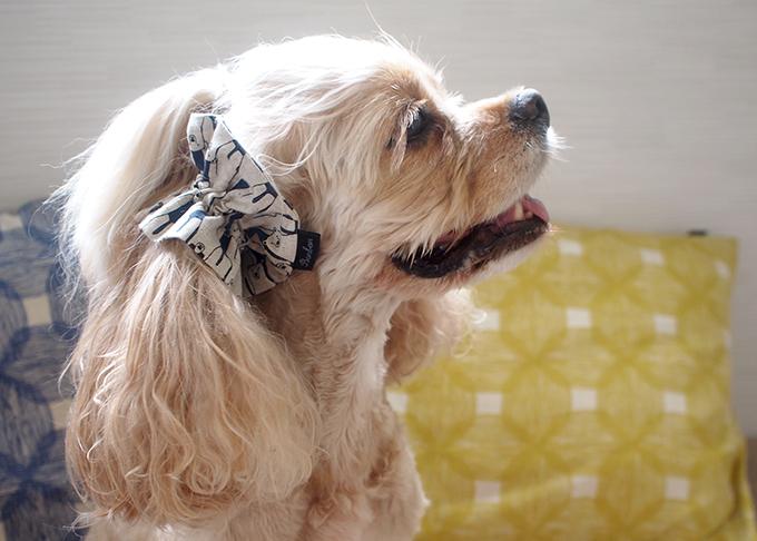 愛犬の耳を彩るイヤーシュシュ 白くまシリーズ