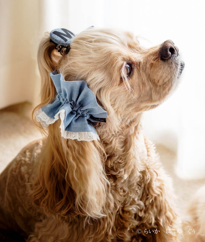 愛犬の耳を彩るイヤーシュシュ マカロンシリーズ