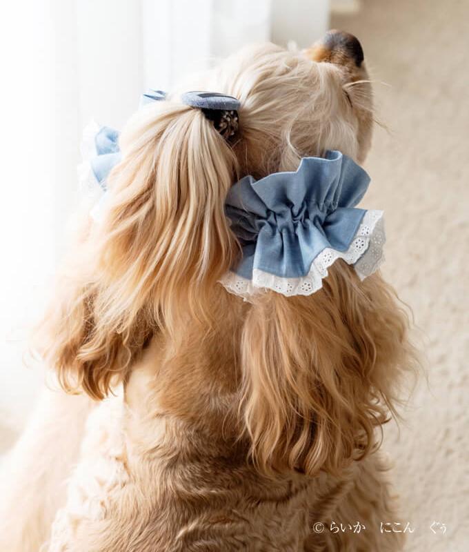 愛犬の耳を彩るイヤーシュシュ マカロン 後ろ