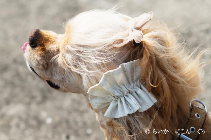 愛犬の耳を彩るイヤーシュシュ テラスシリーズ 上から
