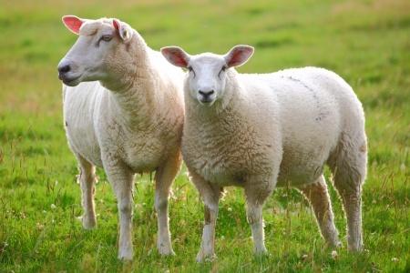 【KiaOra(キアオラ)】 無添加ドッグフード ラム 羊