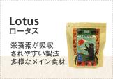 ロータス(Lotus)