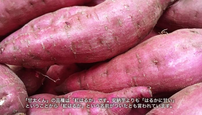 「甘太くん」の品種は「紅はるか」です。安納芋よりも「はるかに甘い」ということから「紅はるか」という名前がついたとも言われています。