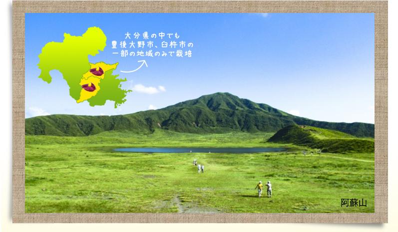 大分県の中でも豊後大野市、臼杵市の一部の地域のみで栽培