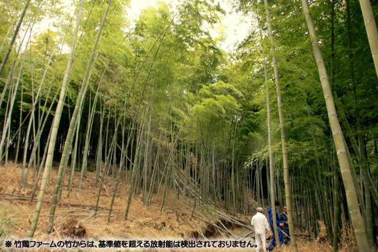 竹鶏ファームの竹林