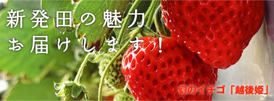 幻のイチゴ「越後姫」