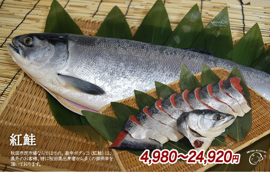紅鮭(ボダッコ)