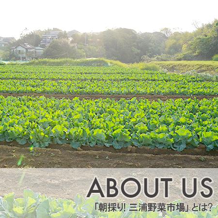 ABOUT US|「朝採り!三浦野菜市場」とは?