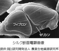 シルク断面電顕画像