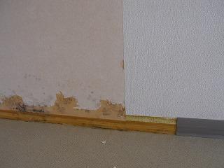 壁紙を剥がしてみると、壁紙の裏側にカビが