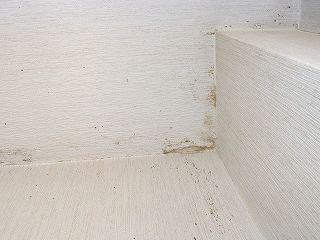 天井付近に発生したカビ