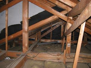 鳥が巣を作っていた屋根裏