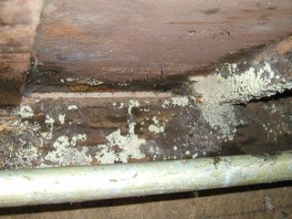 シロアリの蟻道も有った床下壁付近