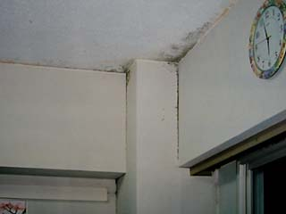 壁際と天井にカビが発生しており、臭いもする。
