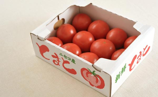 ニセコ産 大玉トマト桃太郎の写真