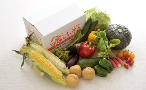 北海道ニセコ産 旬の野菜セットの写真