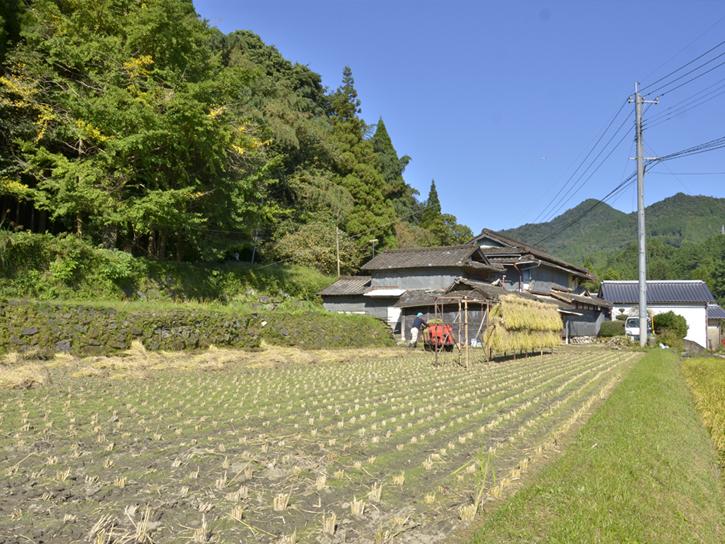 山本さんの田圃