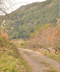 山あいの果樹園