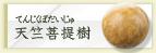 天竺菩提樹(てんじくぼだいじゅ)