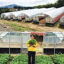 パクチーが栽培される環境