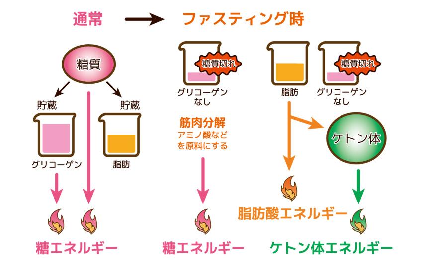 枯渇 肝 グリコーゲン