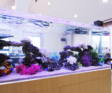 海水魚観賞用水槽2