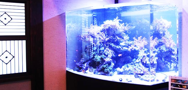 海水魚観賞用水槽1