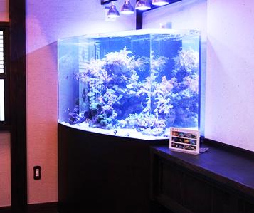 海水魚観賞用水槽3