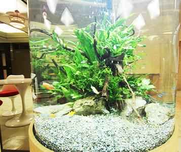 インテリア円柱水槽 淡水魚2