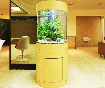 インテリア円柱水槽 淡水魚3