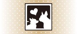 【BUDDYBELT】バディーベルト・犬用品は吉祥寺ペットサロン シアンドゥシュシュ