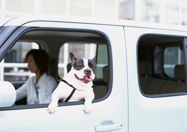 ハイブリットカーの電磁波対策DRIVE SMARTERは敏感なペットとのドライブにもお勧め