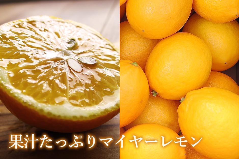 果汁たっぷりマイヤーレモン