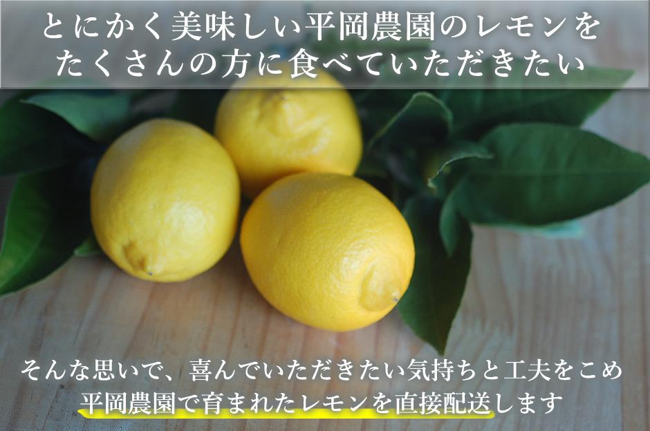 とにかく美味しい平岡農園のレモンをたくさんの方に食べていただきたい