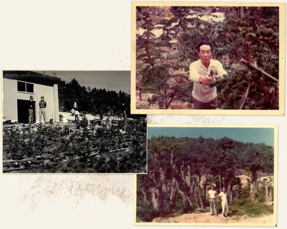 植木生産を始める