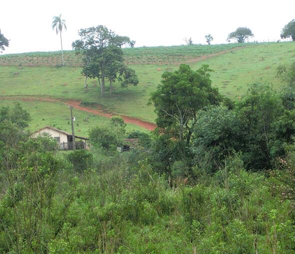 ムクナの栽培を委託している農場