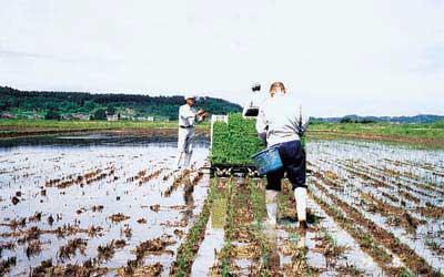 自然回帰農法 由利本荘産 農薬・化学肥料不使用 玄米